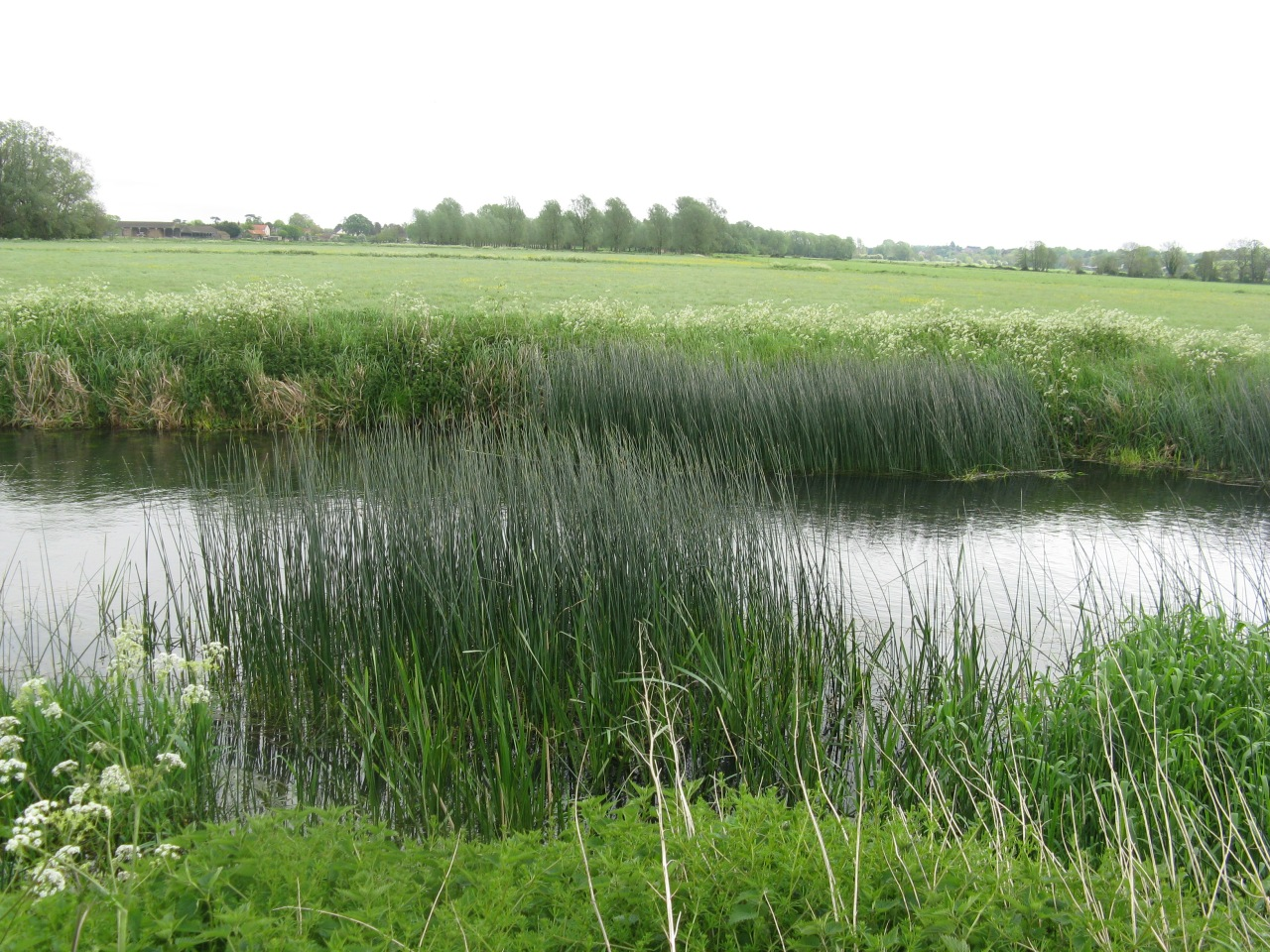 view of rushes on River Waveney